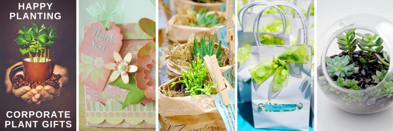 Happy Planting Corporate Plant Gifts