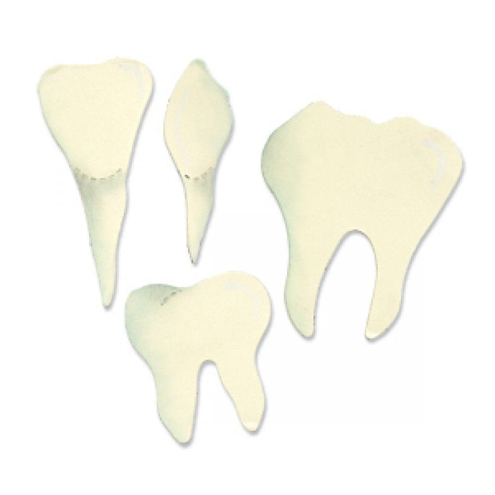 Sizzix Bigz Die - Teeth (Molar, Incisor & Canine) - A10823