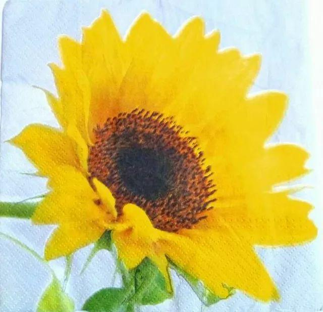 Decoupage Napkin / Tissue papers - sunflower