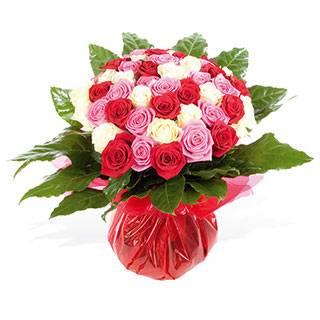 RosesNroses