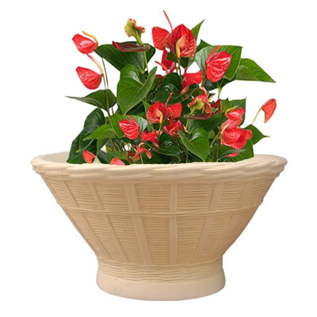 Cream White Bam Tok Round 18 Inches Planter