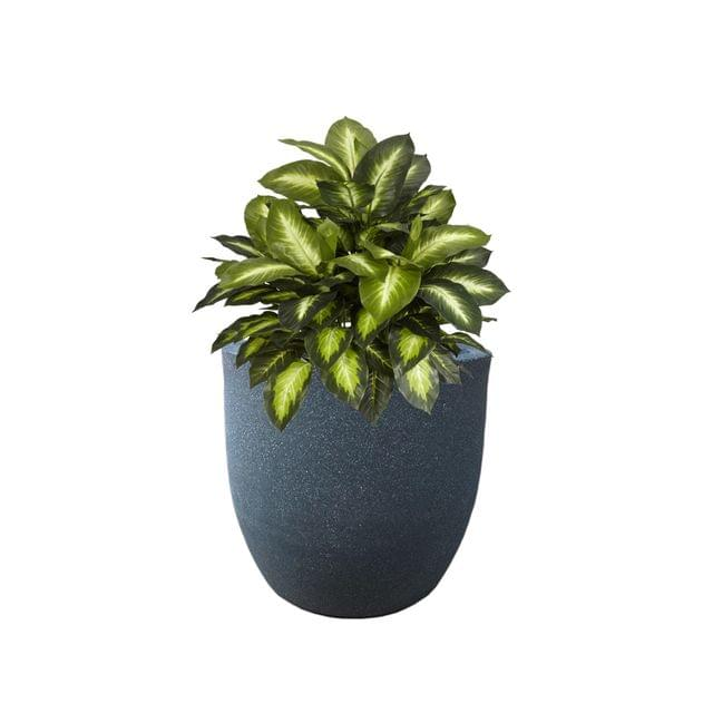 YUCCABE FOXB Pcup grey 12 Inches Planter