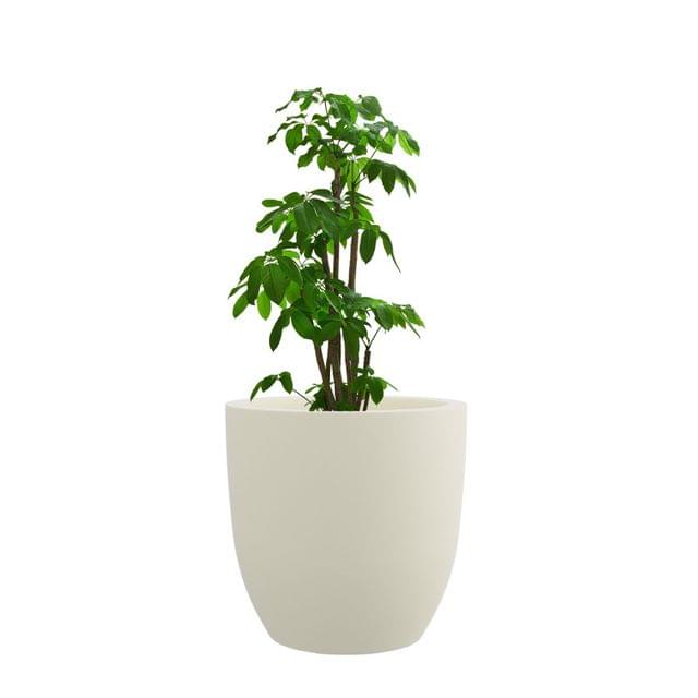 Creame White 12 Inches P Cup Planter