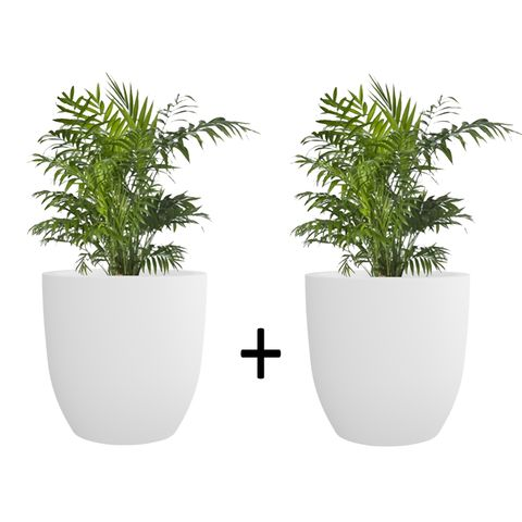 Pack of 2 Creame White P Cup Planter