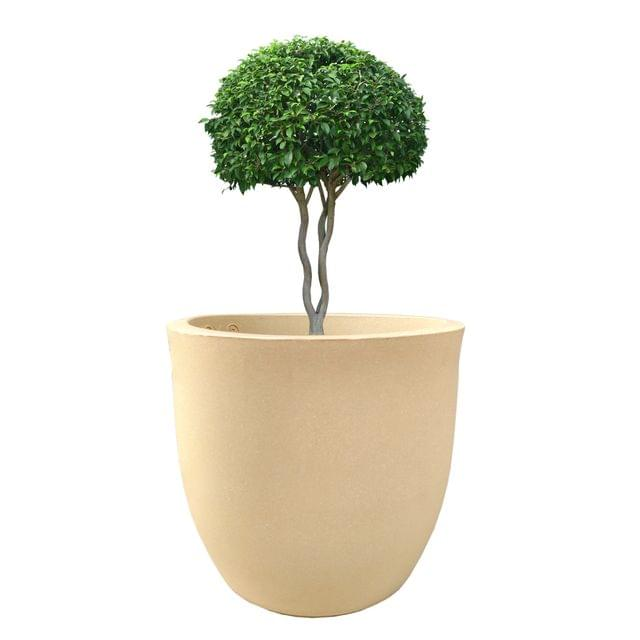 YUCCABE FOXB Pcup Beige 17 Inches Planter