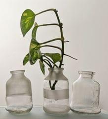 Handy Bottle Planter 100ml
