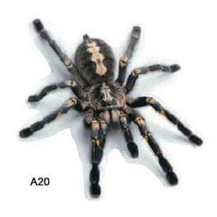 3D Car Stickers Animals Bumper Stickers Spider Lizard - A20