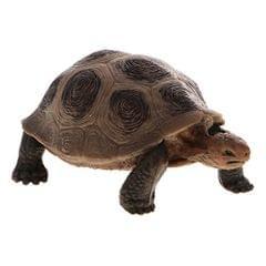 Realistic Animal Model Figurine Action Figures Educational Toy Tortoise #1