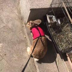 Hamster Rabbit Guinea Pig Rat Ferret Breathable Mesh Harness Leash Black M